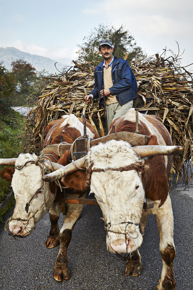 Farmer with cow drawn cart_2