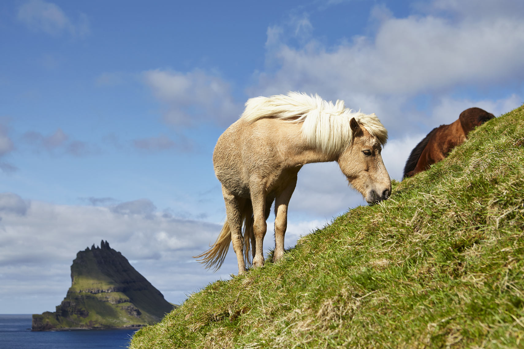 Faroese pony on Bøur_2