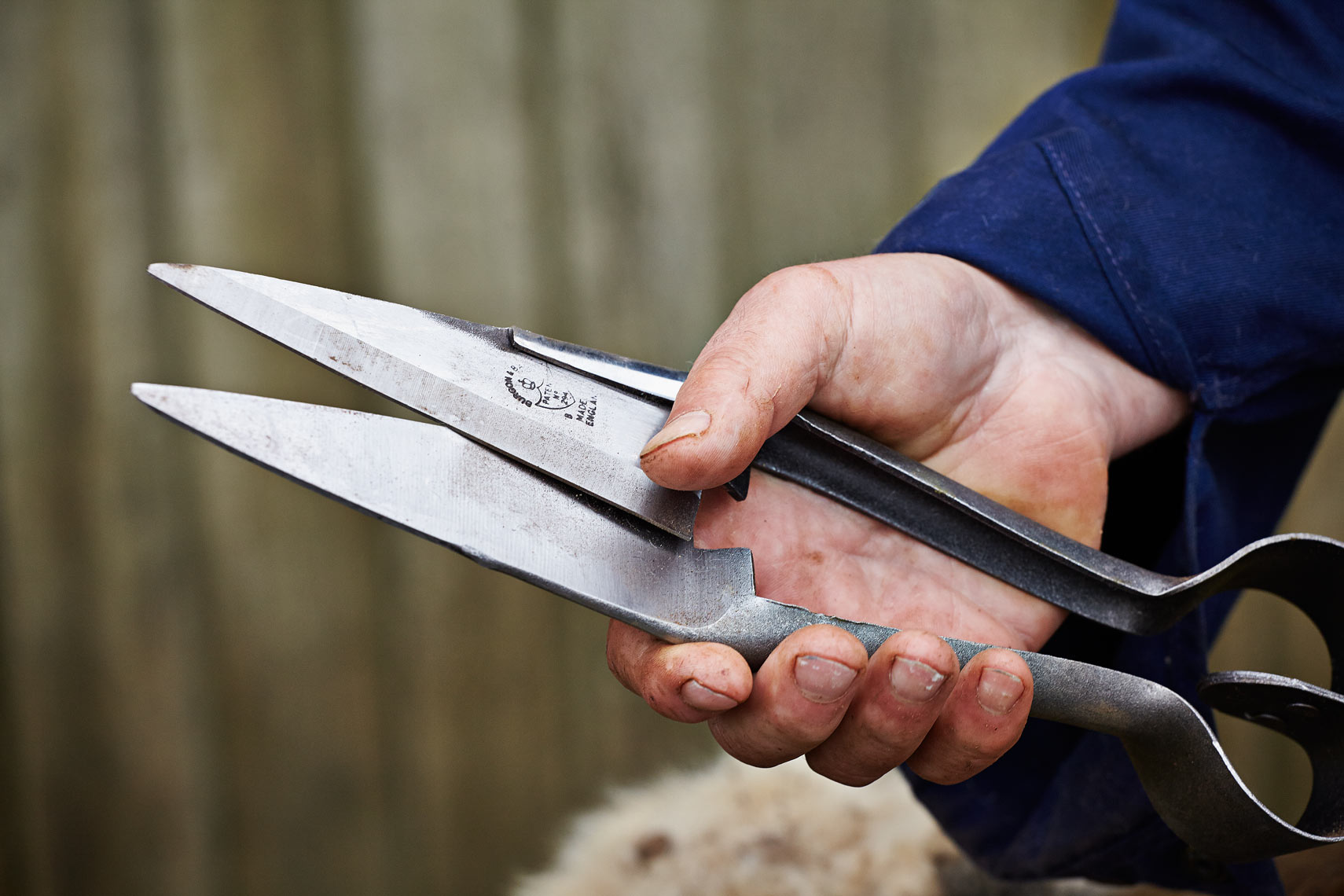 Sheep shears